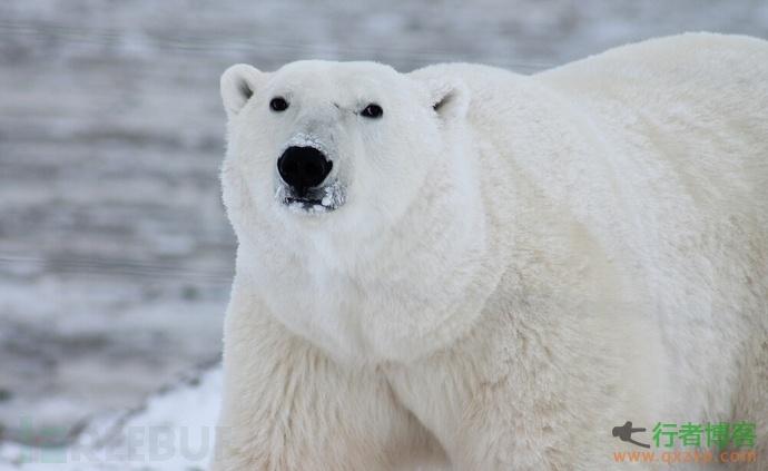 北极熊扫描器3.5增加超级搜索,云平台支持在线安装配置等功能